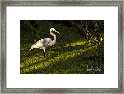 White Egret Framed Print by Marvin Spates