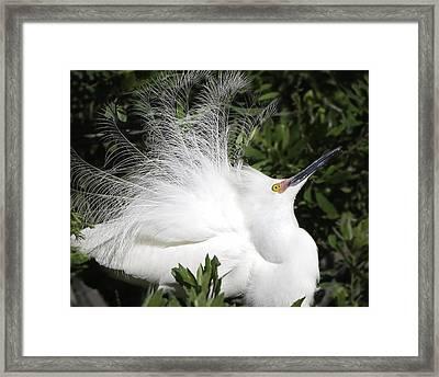 White Egret Framed Print by Nian Chen