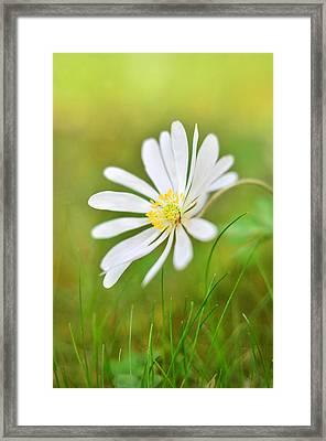 White Flower Framed Print by Gynt