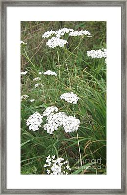 White Flowers Framed Print by John Williams