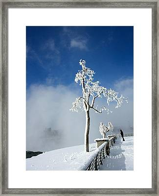 White Freeze Framed Print by Gothicolors Donna Snyder