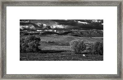 White Horse Framed Print by Peter Tellone