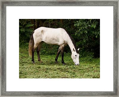 White Horse Framed Print by Sherry Dooley