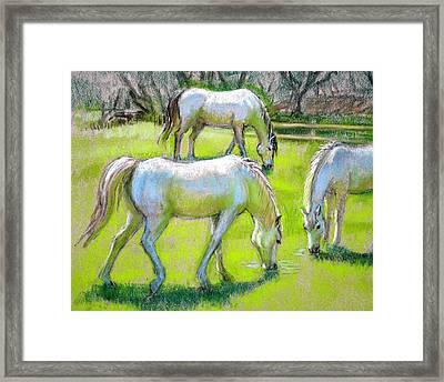 White Horses Grazing Framed Print by Sue Halstenberg