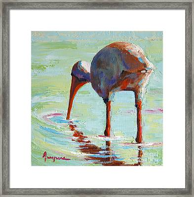 White Ibis  Everglades Bird  Framed Print by Patricia Awapara