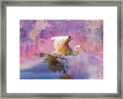 White Lake Swamp Egret Framed Print by J Larry Walker