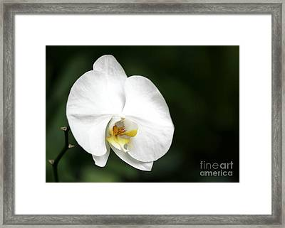 White Light Framed Print by Sabrina L Ryan