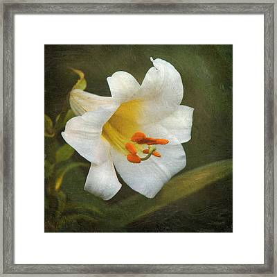 White Lily Framed Print by Angie Vogel