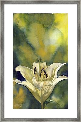 White Lily With Blue Framed Print by Alfred Ng