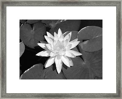 White Lotus 2 Framed Print by Ellen Henneke