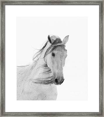 White Mare In The Snow Framed Print by Carol Walker