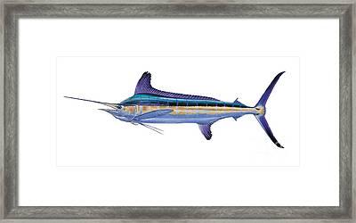 White Marlin Framed Print by Carey Chen