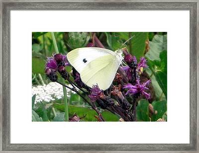 White On Purple On Green Framed Print by Robert Lance