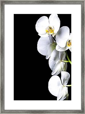 White Orchid II Framed Print by Erik Brede