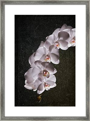White Orchid Still Life Framed Print by Tom Mc Nemar