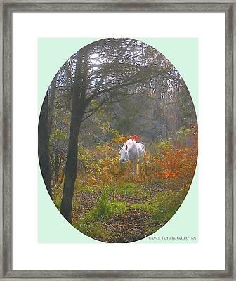White Paso Fino Stallion Enjoys The Autumn Day Framed Print by Patricia Keller
