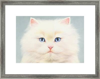 White Persian Framed Print by Andrew Farley