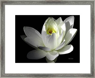 White Petals Aquatic Bloom Framed Print by Julie Palencia