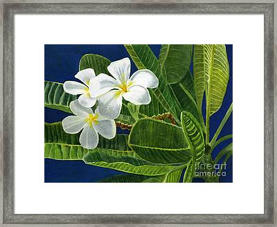 White Plumeria Flowers With Blue Background Framed Print by Sharon Freeman