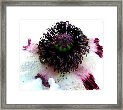 White Poppy Macro Framed Print by The Creative Minds Art and Photography