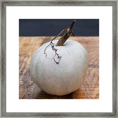 White Pumpkin Framed Print by Indigo Schneider