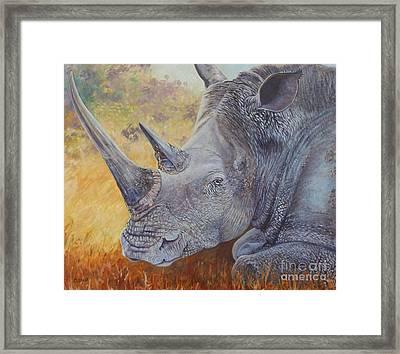 White Rhino Framed Print by Caroline Street