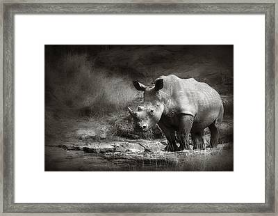 White Rhinoceros Framed Print by Johan Swanepoel