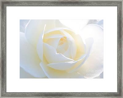 White Rose Energy Framed Print by Carol Groenen