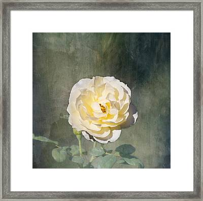 White Rose Framed Print by Kim Hojnacki