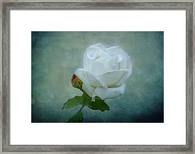 White Rose On Blue Framed Print by Sandy Keeton