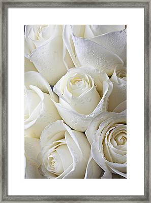 White Roses Framed Print by Garry Gay