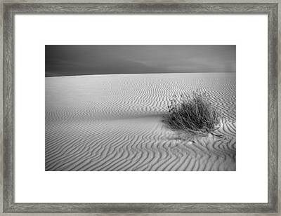 White Sands Scrub Bw Framed Print by Peter Tellone