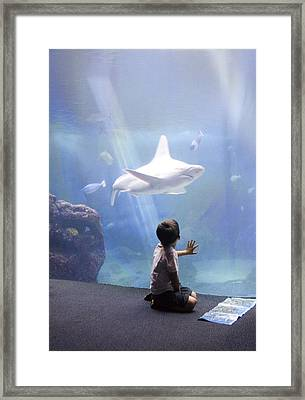 White Shark And Young Boy Framed Print by David Smith