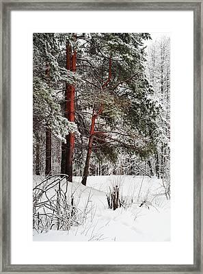 White Silence 1 Framed Print by Jenny Rainbow