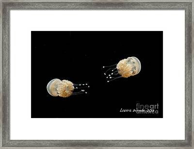 White Spotted Jelly Fish From Austrailia Framed Print by Artist and Photographer Laura Wrede