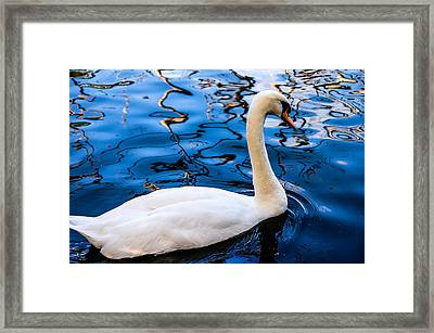 White Swan In The Reflective Water Framed Print by Jenny Rainbow