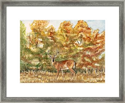 White Tail Buck In The Ozarks  Framed Print by Patty Vicknair