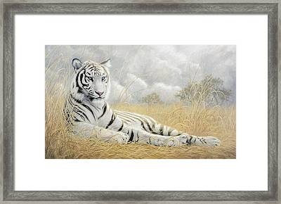 White Tiger Framed Print by Lucie Bilodeau