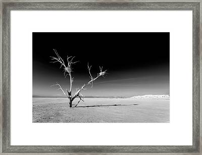 White Tree Framed Print by Peter Tellone