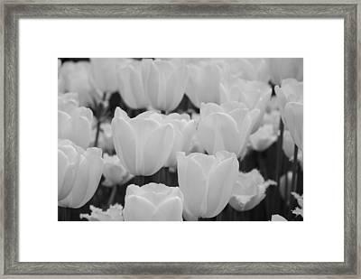 White Tulips B/w Framed Print by Jennifer Ancker