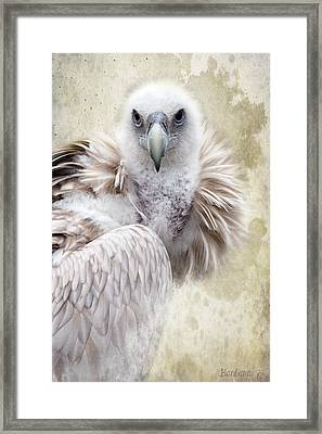 White Vulture  Framed Print by Barbara Orenya