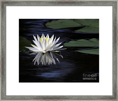 White Water Lily Left Framed Print by Sabrina L Ryan