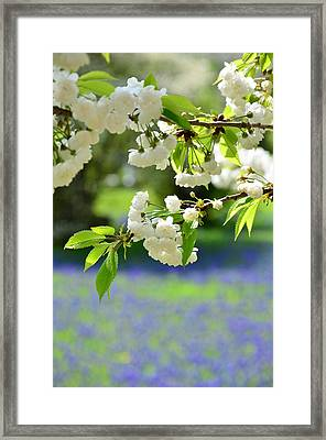 White With Blue Framed Print by Gynt