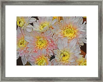 White Yellow Chrysanthemum Flowers Framed Print by Johnson Moya