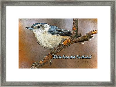 Framed Print featuring the photograph Whitebreasted Nuthatch by A Gurmankin