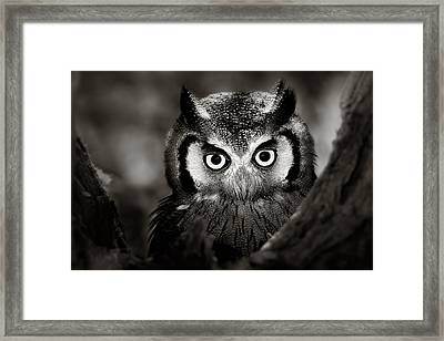 Whitefaced Owl Framed Print by Johan Swanepoel