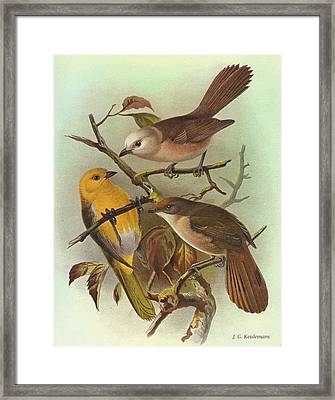 Whitehead Yellowhead And Brown Creeper Framed Print by J G Keulemans