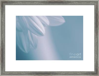 Whiteness 02 Framed Print by Aimelle