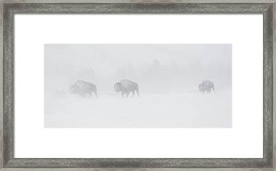 Whiteout Framed Print by Sandy Sisti
