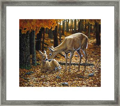 Whitetail Deer - Autumn Innocence 2 Framed Print by Crista Forest